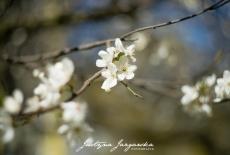 Wiosna w obiektywie